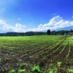 農家さんの畑